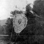 Dérlepte pókháló