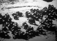 Elefántcsorda Afrikában