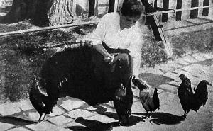Az állatkerti cukrászkisasszony ingyenvendégei