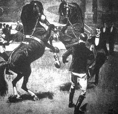 Boxoló lovak.