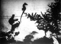 A csikóhal úszás közben