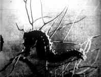 A tenger sekély partvidékén élő csikóhal
