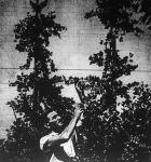 A debreceni Pápay Sándor négyméteres pöszmétefáit különleges ójtási eljárással nevelte.