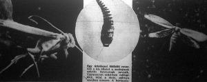 Erős nagyító alatt valóságos ősvilági lénynek látszik a molypille