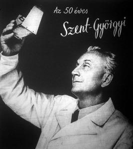 Szent-Györgyi Albert 1943-ban