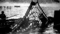 A daruval ellátott őrhajó felvonja az acélhálót