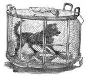 Pasteaur állatkisérlete - veszett kutya