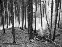 A leégett erdő