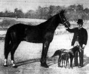 Fifi, Ilianiai poni kancza csikójával