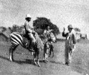Lovaglás zebrán