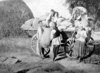 Kocsikra rakják a gabonát