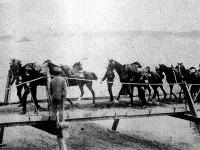 A huszárok átvezetik lovaikat