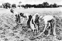 Kapáló földművesek
