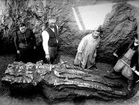 15 millió évvel ezelőtti ősbálna csontváza a feltáráskor