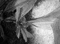 Jégvirág nyoma lemezen