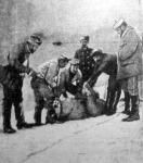 Az expediczió tagjai egy elejtett jegesmedvét felbontanak