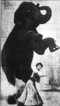 Tánczoló elefánt