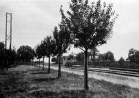 Gyümölcsfák a vasút mentén