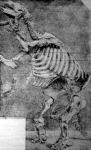 Az őskori állat csontváza