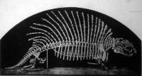 Naosaurus csontváza