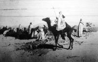 Arab karaván