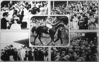 A Szent István-díj győztese: Sixtus, báró Üchtritz Zsigmond lova