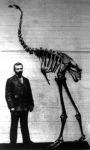 A Moa-madár csontváza