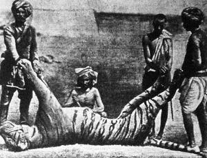 A tigris megnyuzása.
