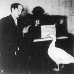 A zongorázó liba