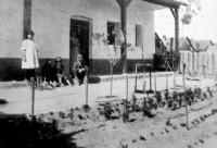 Egy zentai munkáslakás kertes udvara