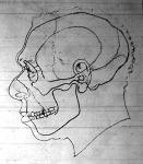 Ebből a rajzból fogalmat nyerhetünk, hogy milyen lehetett az ősember arcza