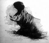A nilusi viziló eltátott szájában tisztán látható fogazata, különösen a fölfelé meredő szemfogagyarak