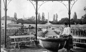 Részlet a margitszigeti kertészetből: a rózsákról leszedik a tövist
