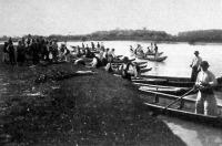 Legelő gulya átusztatása a Nagydunán (Lipót): a kisérő csónakosok