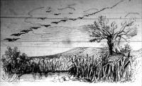 A bibicek az utirányra ferdén fekvő vonalban repülnek
