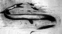 A jura-korszak tengeri kígyója