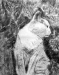 Egy elgondolkodó macska?