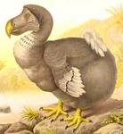 A dronte madár vagy más néven dodo