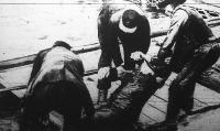 Az elsüllyedt Drina egyik áldozata