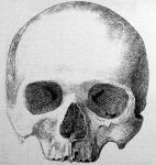 Petőfi állítólagos koponyája