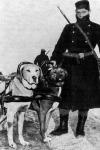 Gépfegyvert vontató kutyák a világháborúban