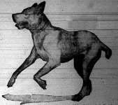 A kutya szolgálatkészen rohan a gazdijához
