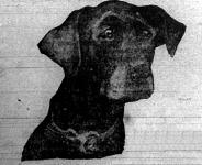 A legintelligensebb állat a kutya