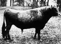 Jersey bika