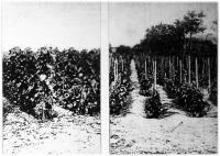 A műtrágyák termésfokozó hatása a szőlő termelésére.