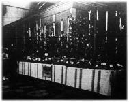 Özv. Mathiász Jánosné kecskeméti Katona-telepi szőlészetének fürt- és tőke-kiállitása a városligeti iparcsarnokban