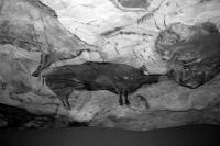 Az ősember barlangrajza: Bölények