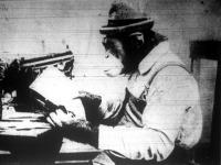 Újságolvasó majom