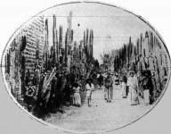 Mexikó az óriáskaktuszok hazája