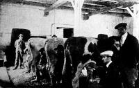 Török ifjak a sárvári tejgazdasági szakiskolában